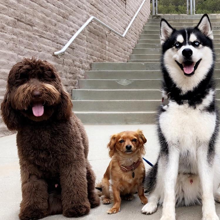 Dog Transport Services