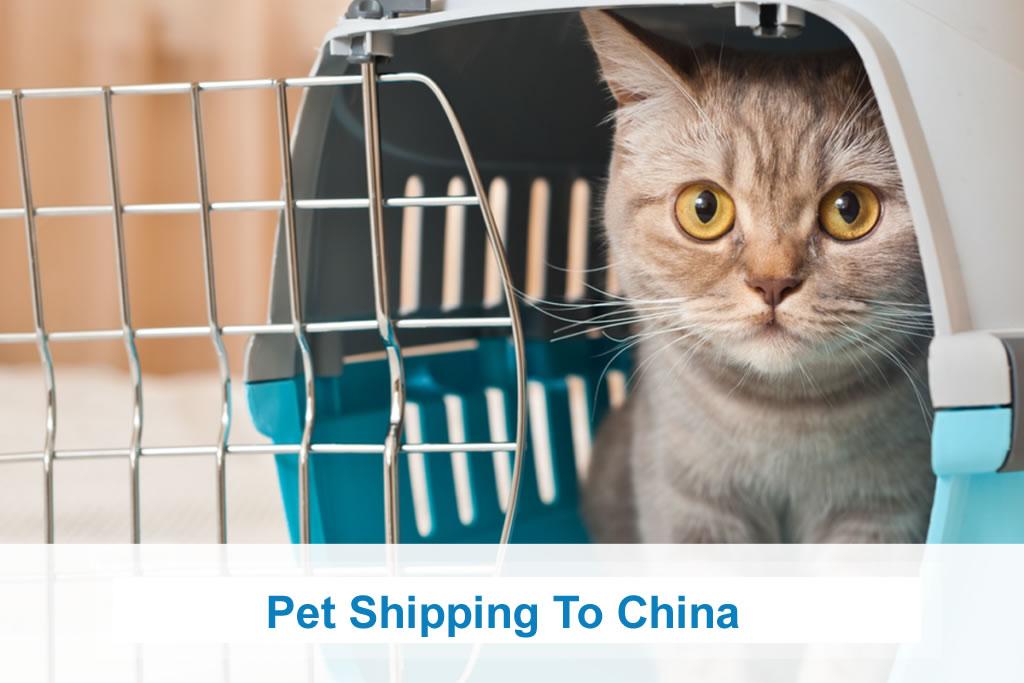 Pet Shipping To China